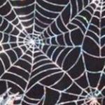 img_spinnenweb375b15